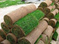 Преимущества рулонного газона в Сочи