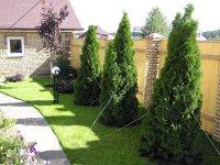 Правила посадки деревьев и кустарников в Сочи