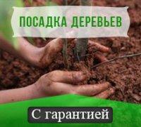 Посадка деревьев с  гарантией