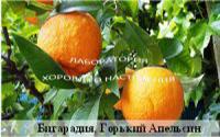 Бигарадия, горький апельсин