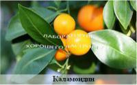 Апельсин «Каламондин»