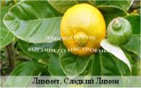 Лиммет, Сладкий Лимон