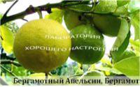 Бергамотный апельсин, Бергамот
